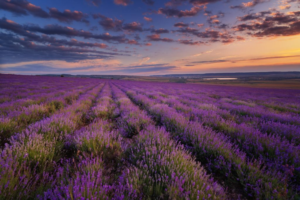 lavender fields tours nice french riviera