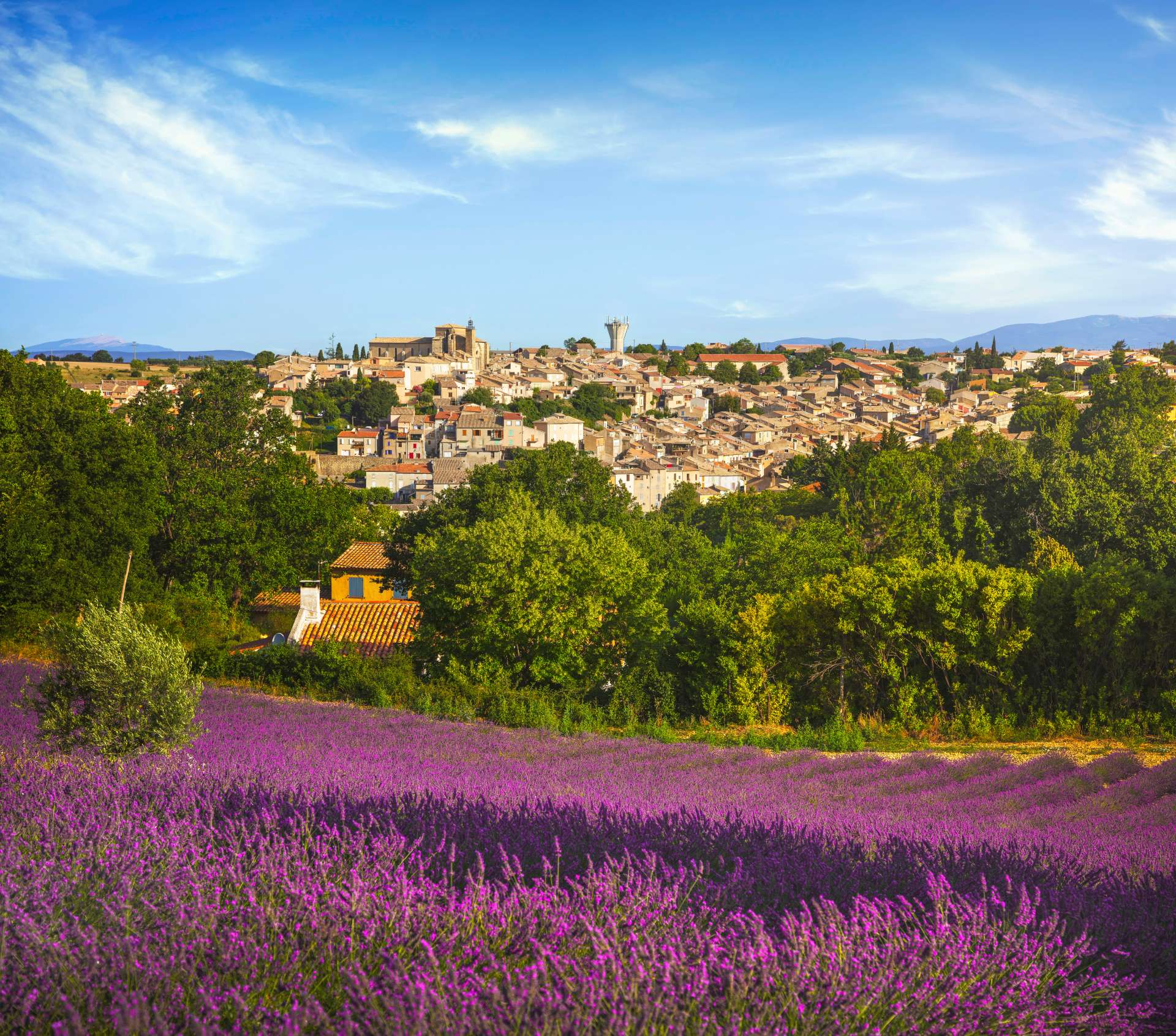 nice to lavender fields tours