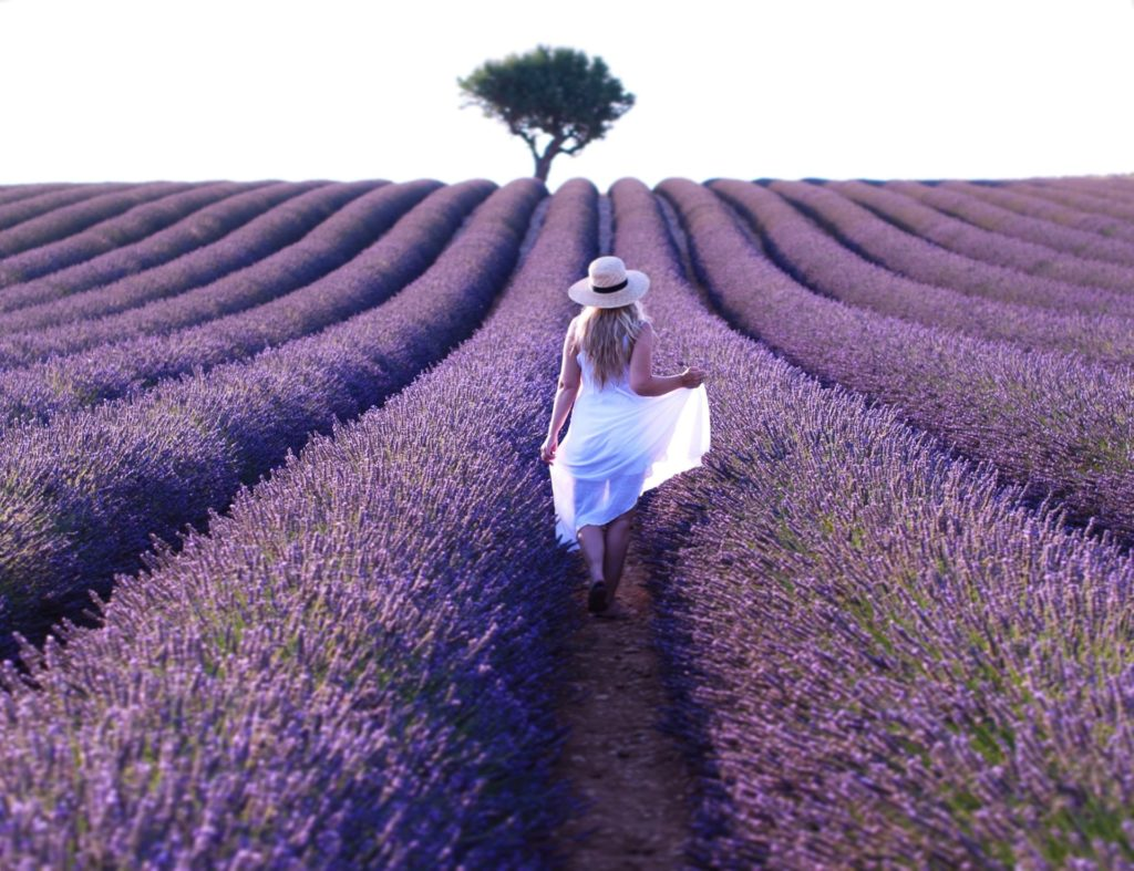 Visit Provence Lavender Fields